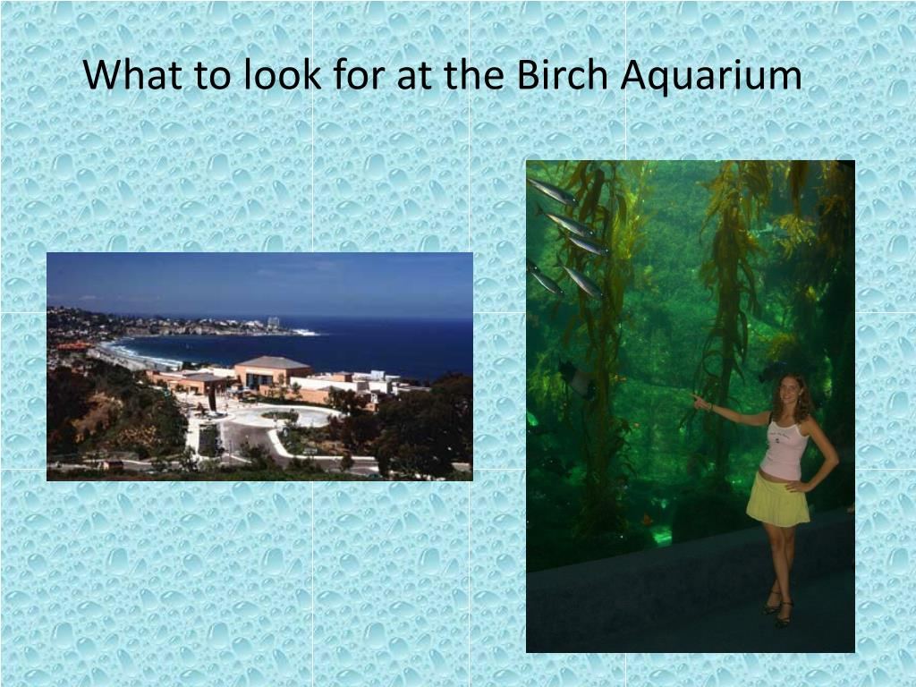 what to look for at the birch aquarium l.