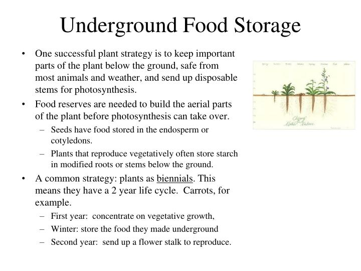 Underground food storage