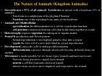 the nature of animals kingdom animalia