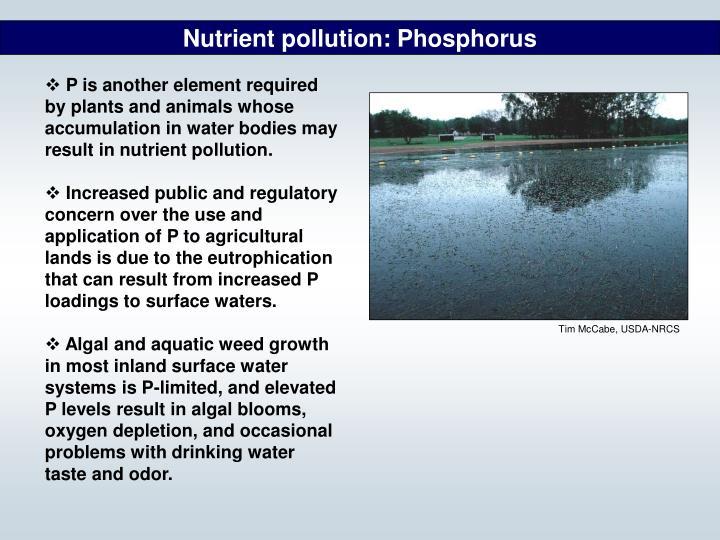 Nutrient pollution: Phosphorus