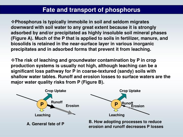 Fate and transport of phosphorus