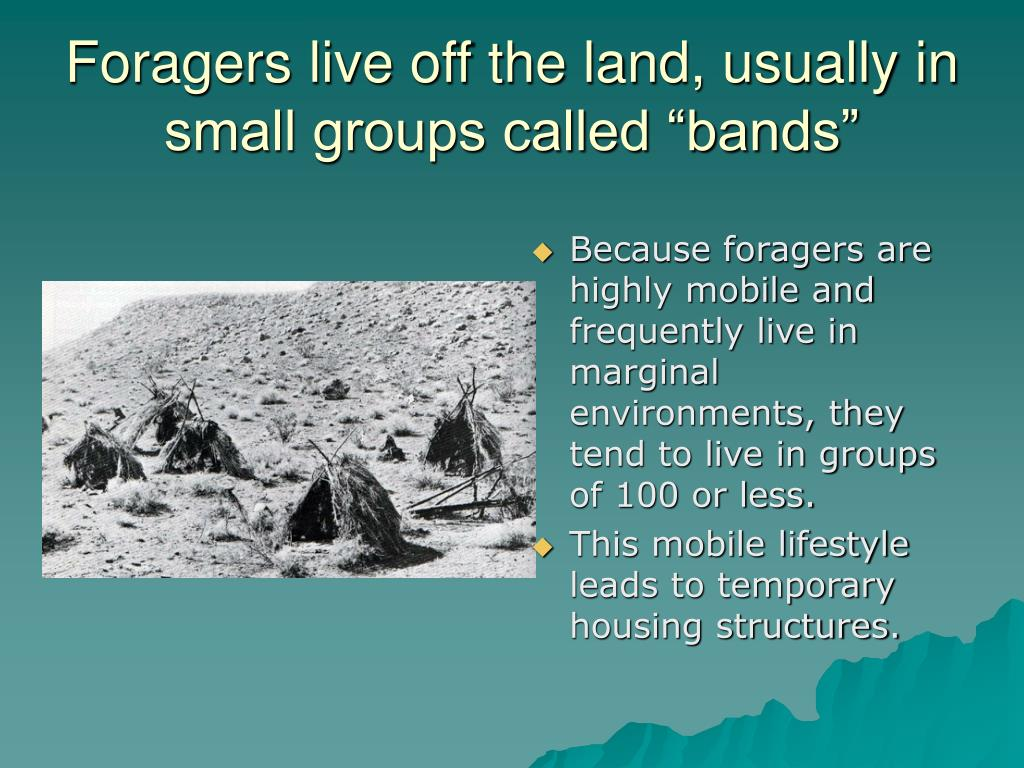 "Foragers live off the land, usually in small groups called ""bands"""