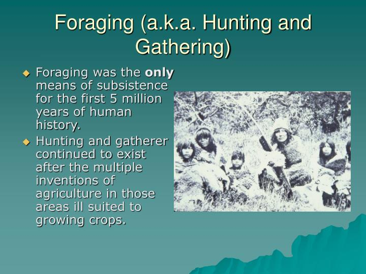 Foraging a k a hunting and gathering