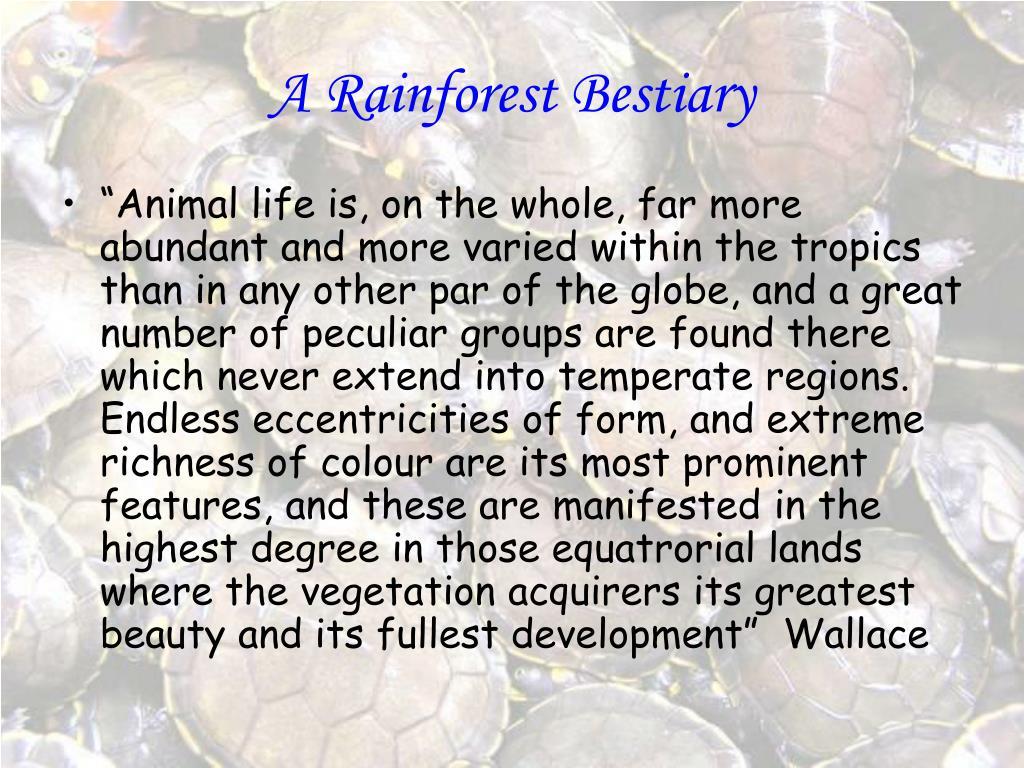 a rainforest bestiary l.