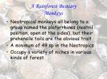 a rainforest bestiary monkeys