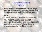 a rainforest bestiary rodents