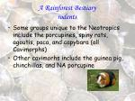 a rainforest bestiary rodents30