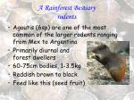 a rainforest bestiary rodents31