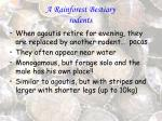 a rainforest bestiary rodents33