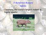 a rainforest bestiary rodents35