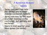 a rainforest bestiary rodents37