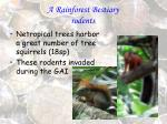 a rainforest bestiary rodents39
