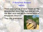 a rainforest bestiary rodents40
