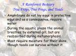 a rainforest bestiary true frogs tree frogs and toads