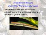 a rainforest bestiary true frogs tree frogs and toads77