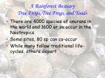 a rainforest bestiary true frogs tree frogs and toads78