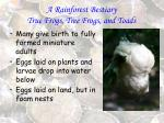 a rainforest bestiary true frogs tree frogs and toads79