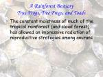 a rainforest bestiary true frogs tree frogs and toads80