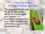 a rainforest bestiary true frogs tree frogs and toads81