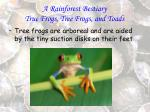 a rainforest bestiary true frogs tree frogs and toads82