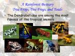 a rainforest bestiary true frogs tree frogs and toads84