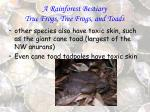 a rainforest bestiary true frogs tree frogs and toads86