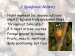 a rainforest bestiary10