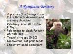 a rainforest bestiary7