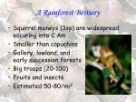 a rainforest bestiary9
