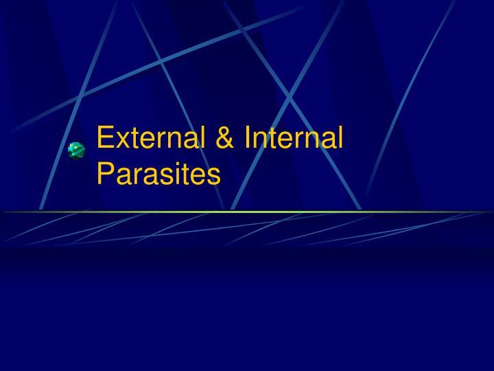 External internal parasites