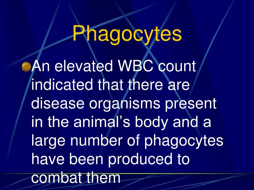 Phagocytes