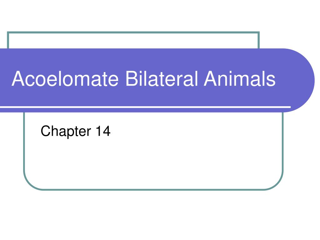 acoelomate bilateral animals l.