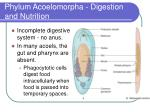 phylum acoelomorpha digestion and nutrition