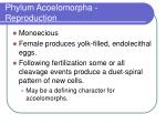 phylum acoelomorpha reproduction