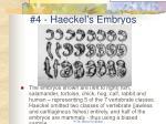 4 haeckel s embryos