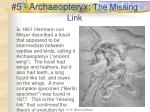 5 archaeopteryx the missing link