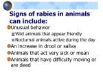 signs of rabies in animals can include