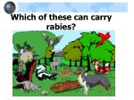 which of these can carry rabies