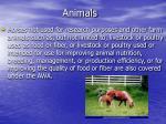 animals6