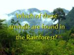 which of these animals are found in the rainforest