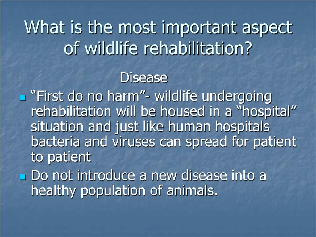 What is the most important aspect of wildlife rehabilitation?
