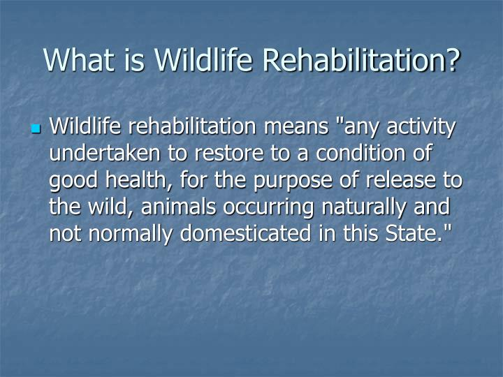 What is wildlife rehabilitation