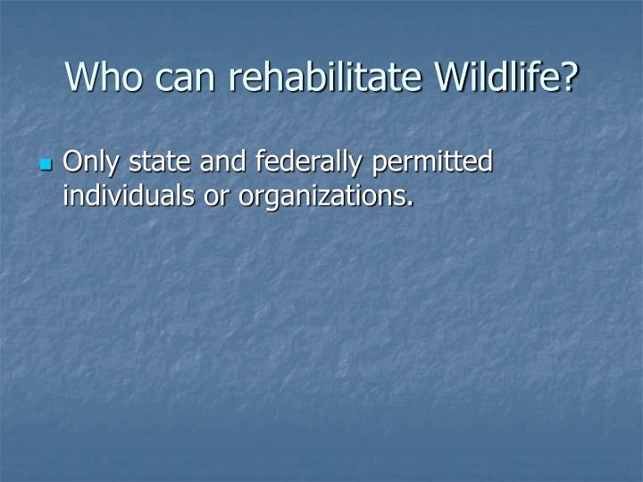 Who can rehabilitate wildlife
