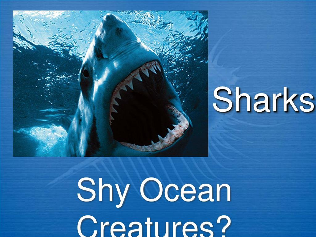 sharks l.