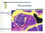 plasmodium1