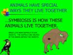 animals have special ways they live together