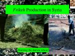 frikeh production in syria27