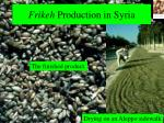 frikeh production in syria28