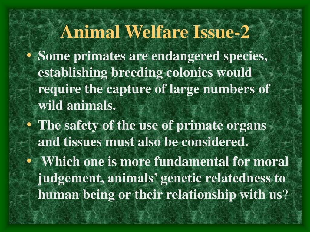 Animal Welfare Issue-2