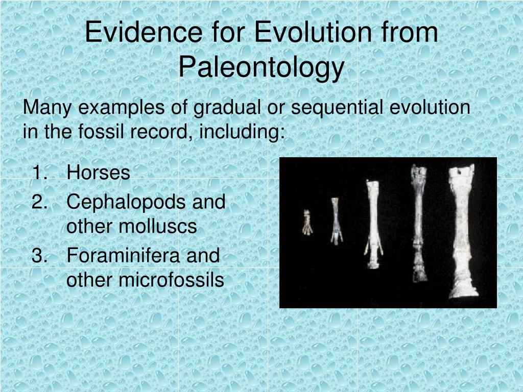 Evidence for Evolution from Paleontology